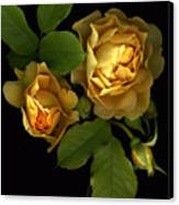 Forever Yellow Roses Canvas Print