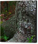 Forms In Nature Canvas Print by Juergen Roth