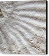 Fossil Four Canvas Print