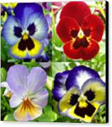 Four Pansies Canvas Print