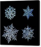 Four Snowflakes On Black Background Canvas Print