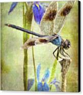 Four Spotted Pennant And Louisiana Irises Canvas Print by Bonnie Barry