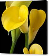 Four Yellow Calla Lilies Canvas Print by Garry Gay