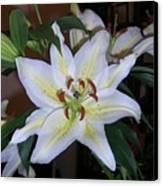 Fragrant White Lily Canvas Print