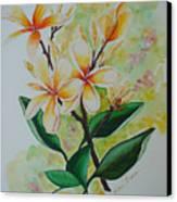 Frangipangi Canvas Print