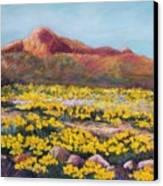 Franklin Poppies Canvas Print