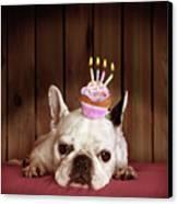 French Bulldog With Birthday Cupcake Canvas Print by Retales Botijero