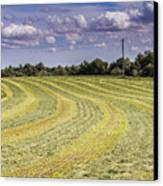 Freshly Mown Hay  Canvas Print