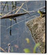 Frog At Pond Canvas Print