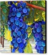 From The Vineyard Canvas Print