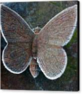 Frosted Butterfly Canvas Print by Kathy DesJardins