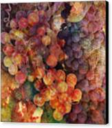 Fruit Of The Vine Canvas Print by Barbara Berney