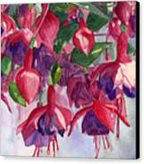 Fuchsia Frenzy Canvas Print
