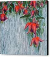 Fuchsia On The Fence Canvas Print