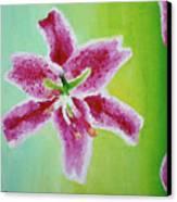 Full Bloom Canvas Print by Missy Yake