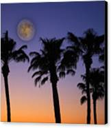 Full Moon Palm Tree Sunset Canvas Print by James BO  Insogna