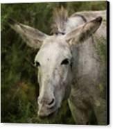Funky Donkey Canvas Print