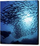 Galapagos Islands Diver Canvas Print by Dave Fleetham - Printscapes