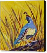 Gamble Quail Canvas Print by Summer Celeste