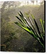 Garden Of Eden Rain Canvas Print by Karen Wiles