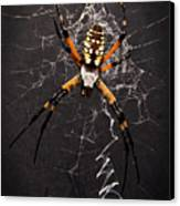 Garden Spider And Web Canvas Print by Tamyra Ayles