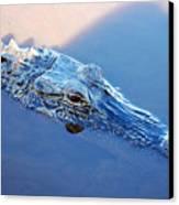 Gator Blues Canvas Print