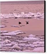 Geese On Lake Huron At Sunset Canvas Print