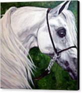 Gentle Arabian Canvas Print