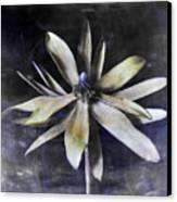 Genus Protea Canvas Print