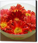 Gerbera Daisies - A Bowl Full Canvas Print