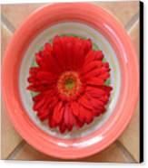 Gerbera Daisy - Bowled On Tile Canvas Print