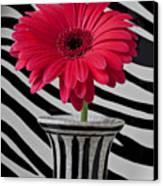 Gerbera Daisy In Striped Vase Canvas Print