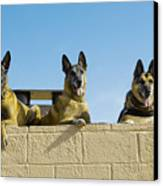 German Shephard Military Working Dogs Canvas Print
