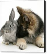 German Shepherd And Rabbit Canvas Print by Mark Taylor
