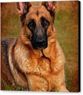 German Shepherd Dog Portrait  Canvas Print by Angie Tirado