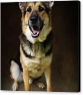 German Shepherd Dog Thor Canvas Print