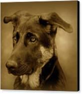 German Shepherd Pup Canvas Print by Sandy Keeton