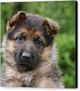 German Shepherd Puppy IIi Canvas Print by Sandy Keeton