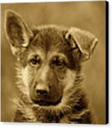 German Shepherd Puppy In Sepia Canvas Print by Sandy Keeton