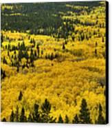 Giant Aspen Glen 2 Canvas Print by Pete Hellmann