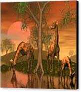 Giraffe Family By John Junek Canvas Print