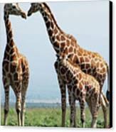 Giraffe Family Canvas Print by Sallyrango