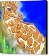 Giraffe Canvas Print by J R Seymour