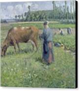 Girl Tending A Cow In Pasture Canvas Print by Camille Pissarro