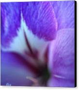Gladiola Close-up Canvas Print by Kathy Yates