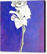 Gladiolus 1 Canvas Print
