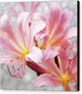 Glowing Surprise Lily Canvas Print