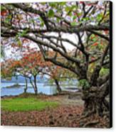 Gnarly Trees Of South Hilo Bay - Hawaii Canvas Print by Daniel Hagerman