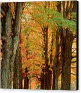 Golden Avenue Canvas Print
