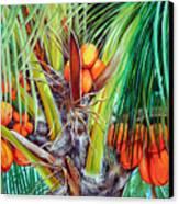 Golden Coconuts Canvas Print